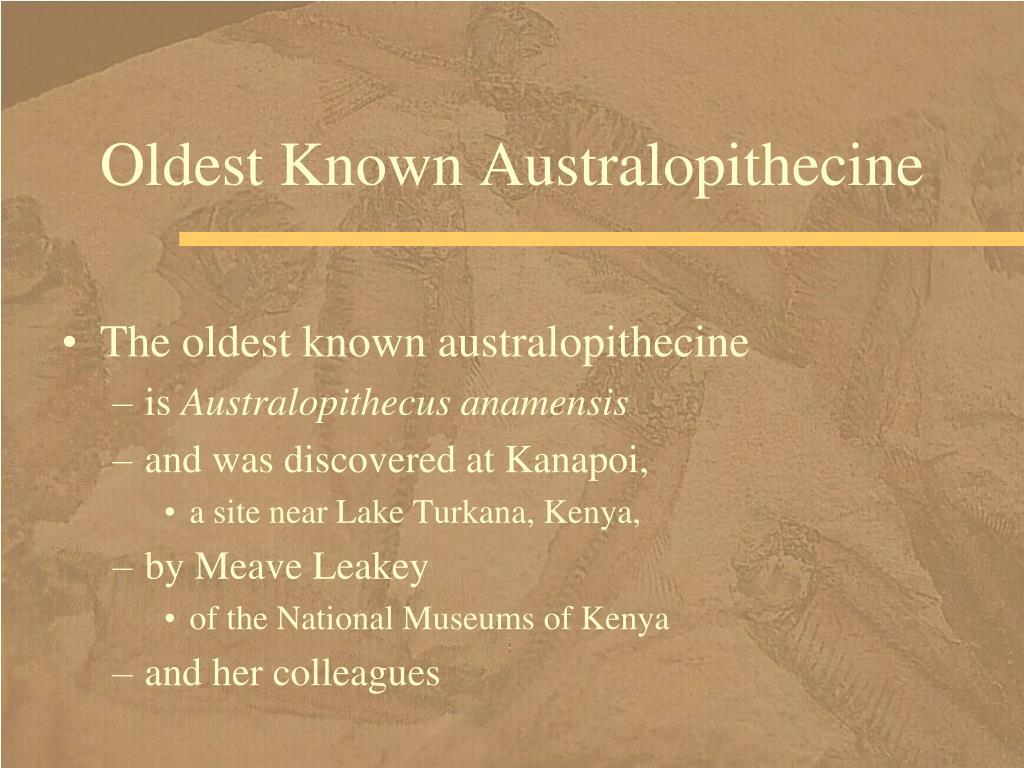 Oldest Known Australopithecine