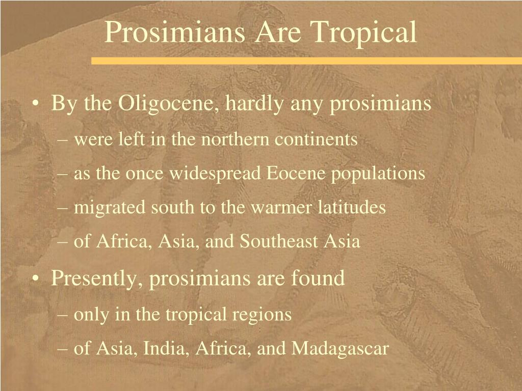 Prosimians Are Tropical
