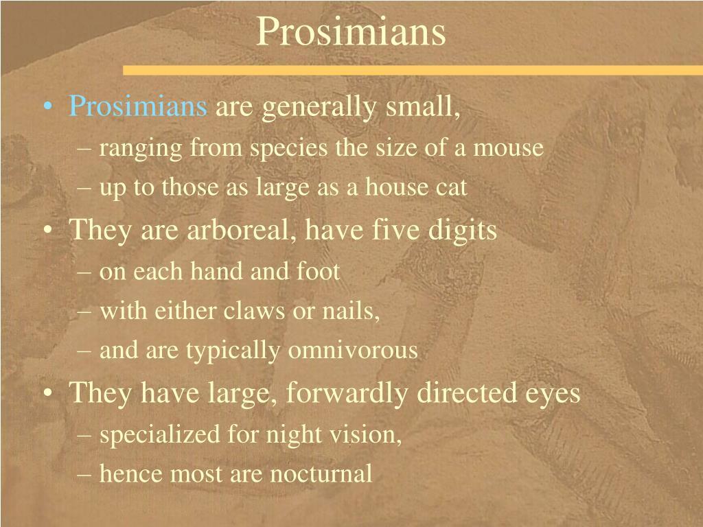 Prosimians