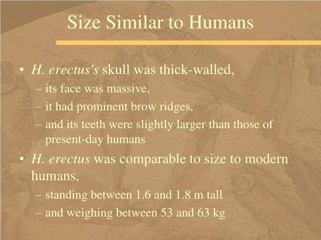 Size Similar to Humans