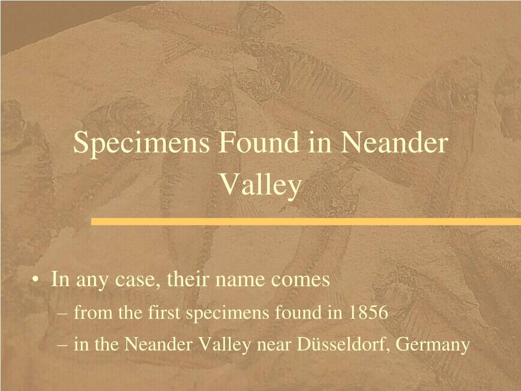 Specimens Found in Neander Valley