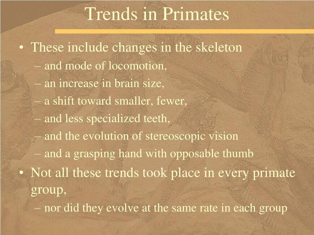 Trends in Primates