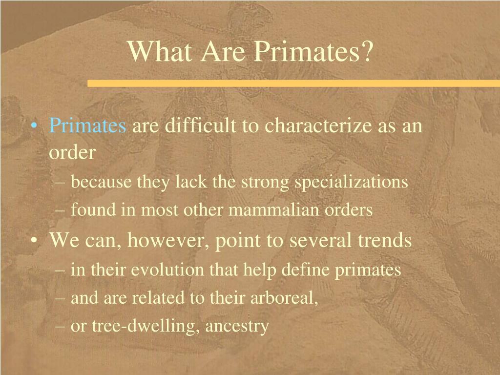 What Are Primates?