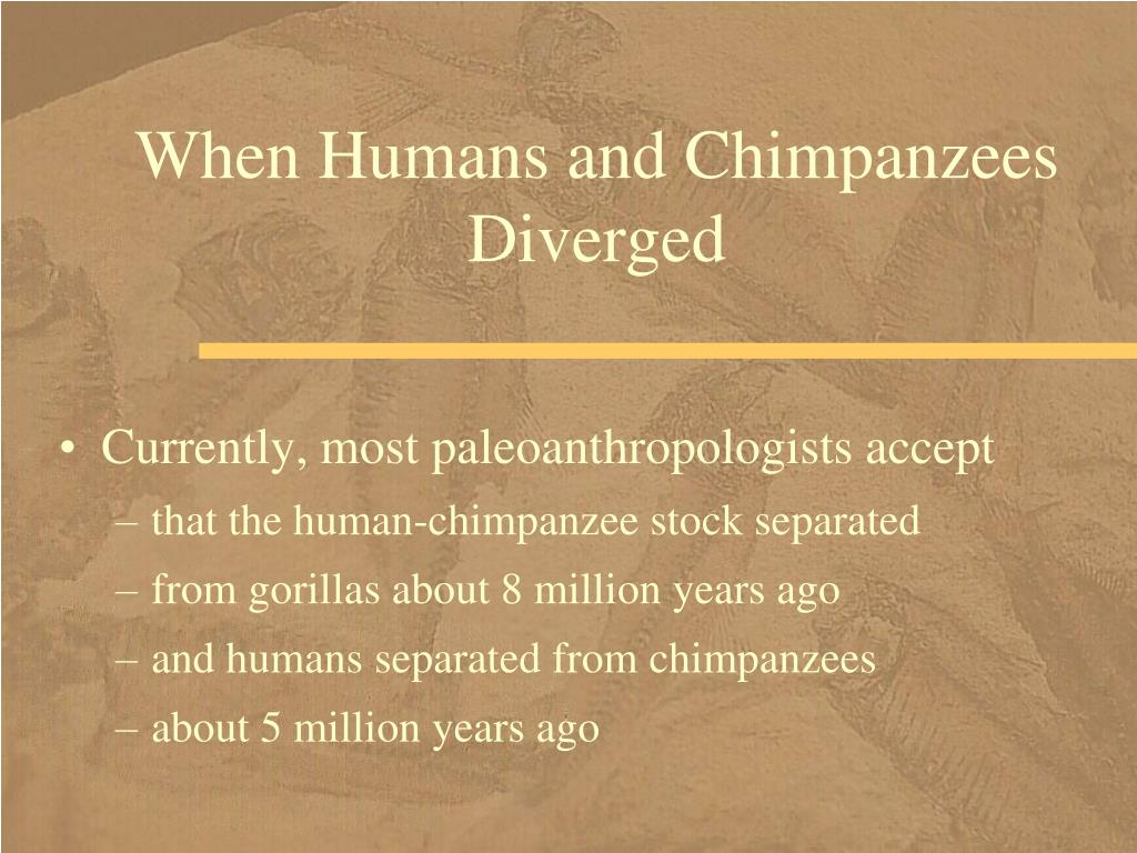 When Humans and Chimpanzees Diverged