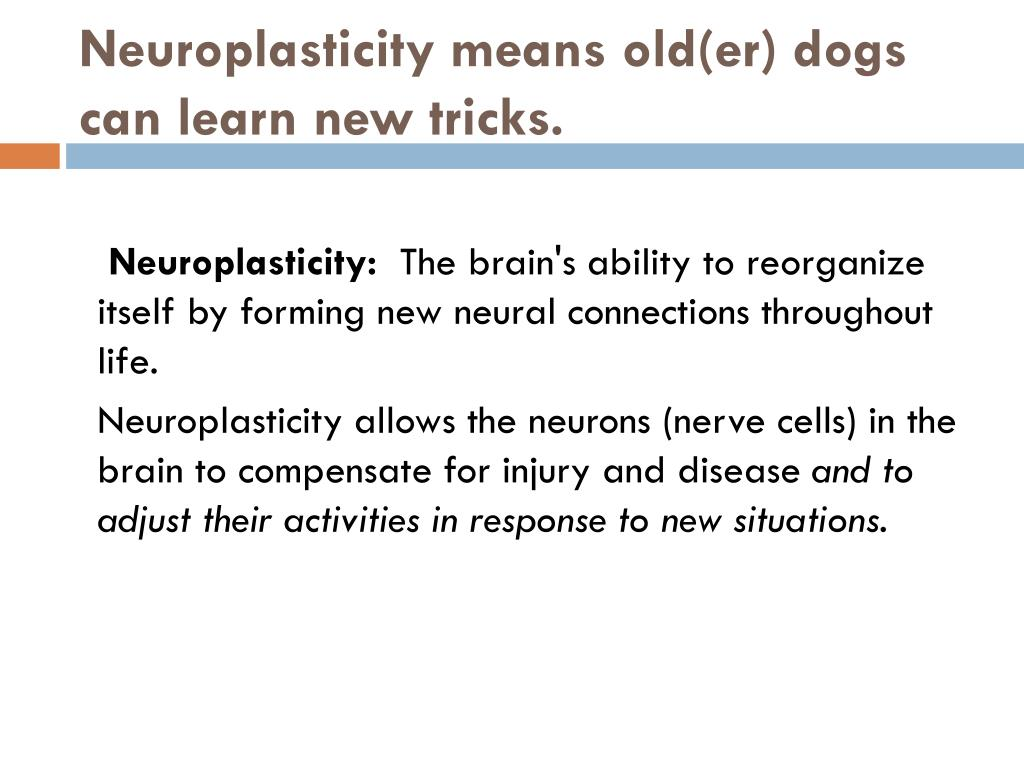 Neuroplasticity means old(