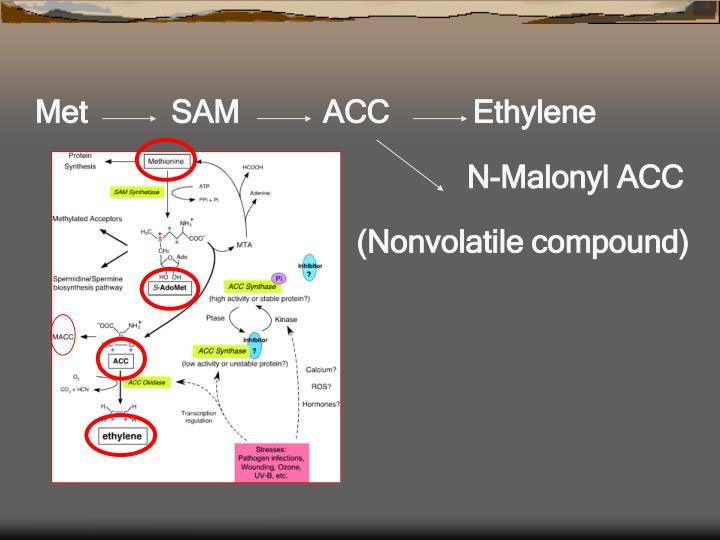 Met          SAM          ACC          Ethylene