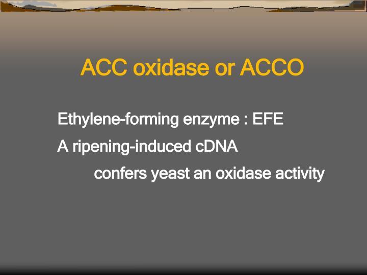ACC oxidase or ACCO