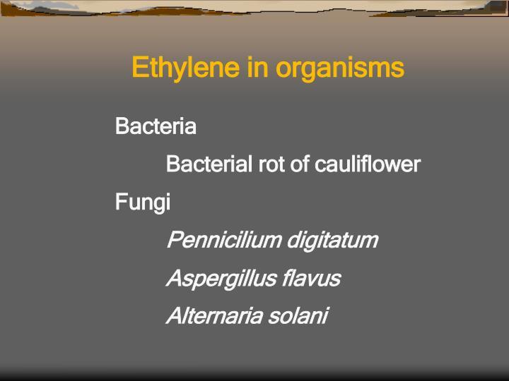 Ethylene in organisms