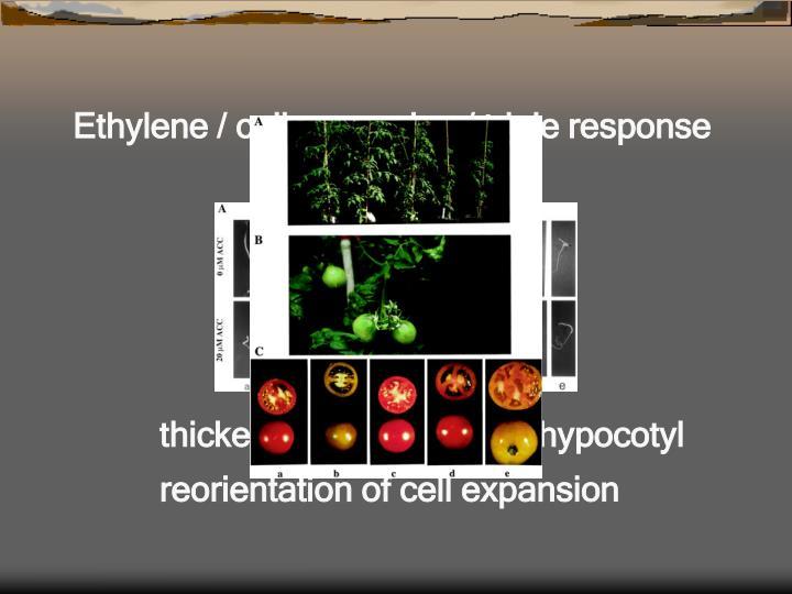 Ethylene / cell expansion / triple response