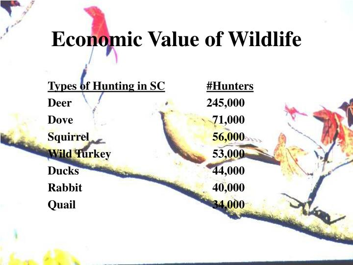 Types of Hunting in SC