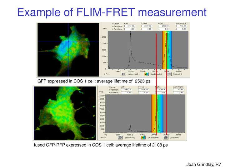 GFP expressed in COS 1 cell: average lifetime of  2523 ps