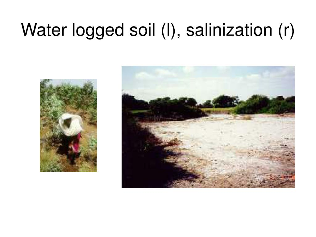Water logged soil (l), salinization (r)