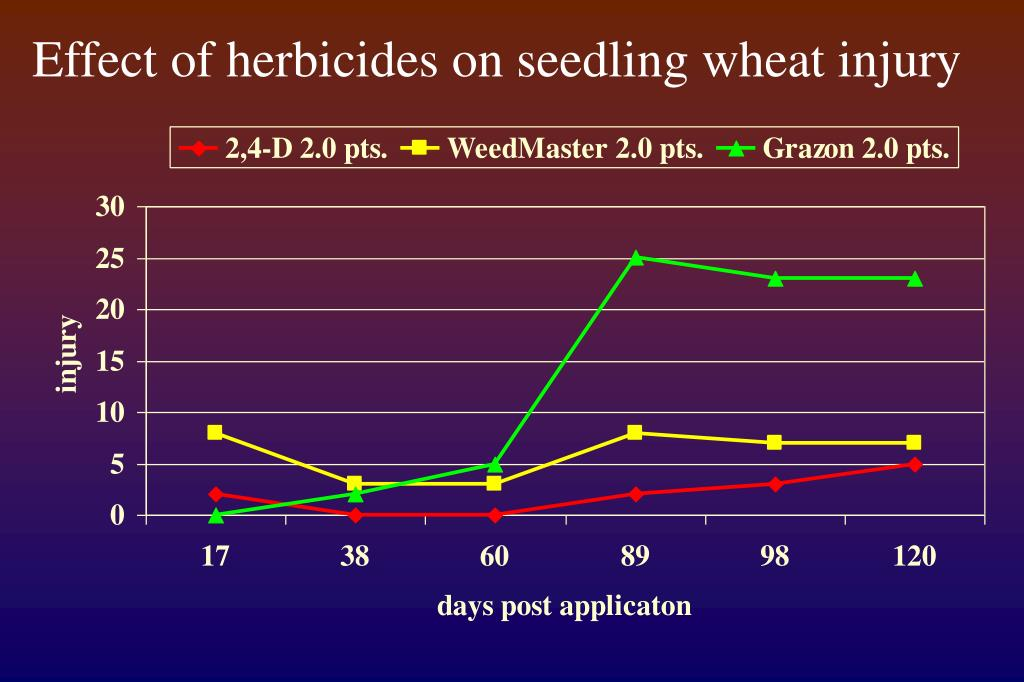 Effect of herbicides on seedling wheat injury