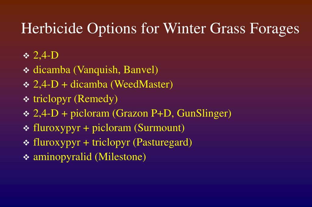 Herbicide Options for Winter Grass Forages