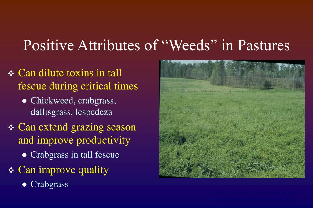 "Positive Attributes of ""Weeds"" in Pastures"