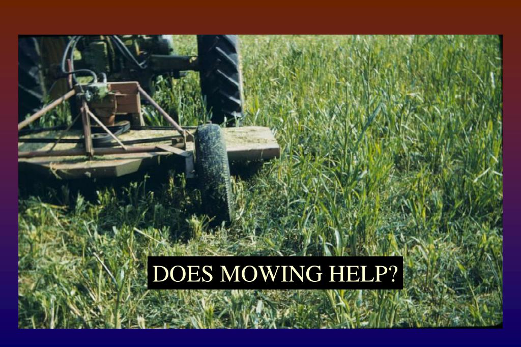 DOES MOWING HELP?