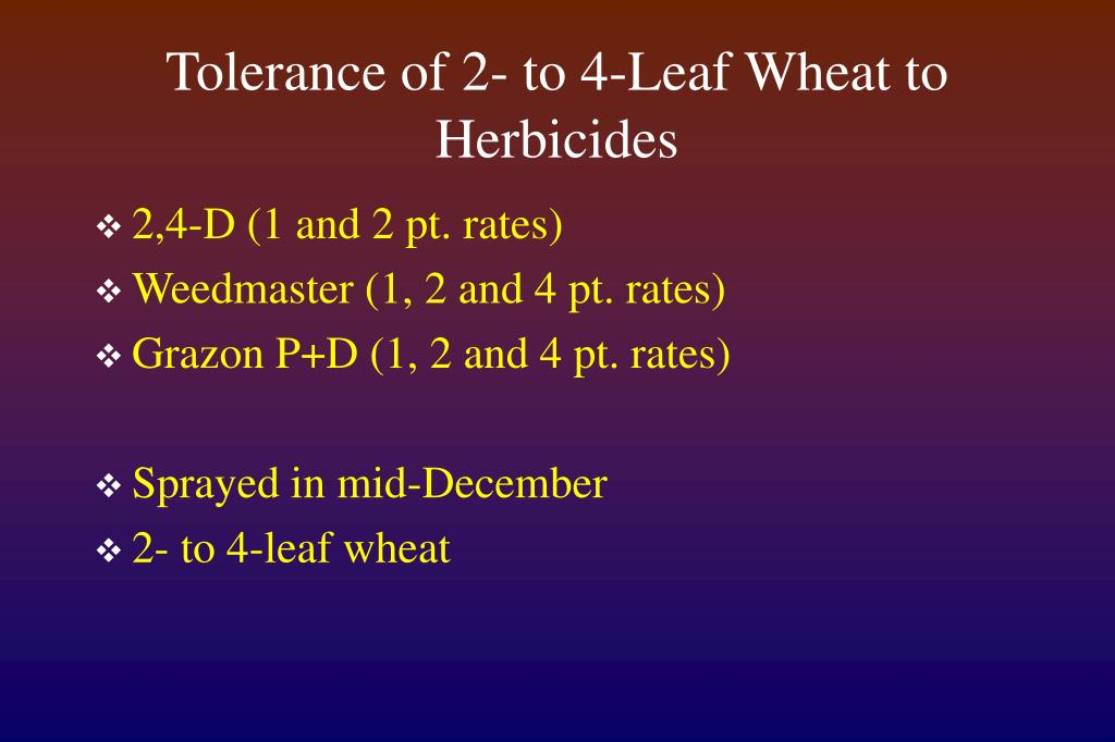 Tolerance of 2- to 4-Leaf Wheat to Herbicides