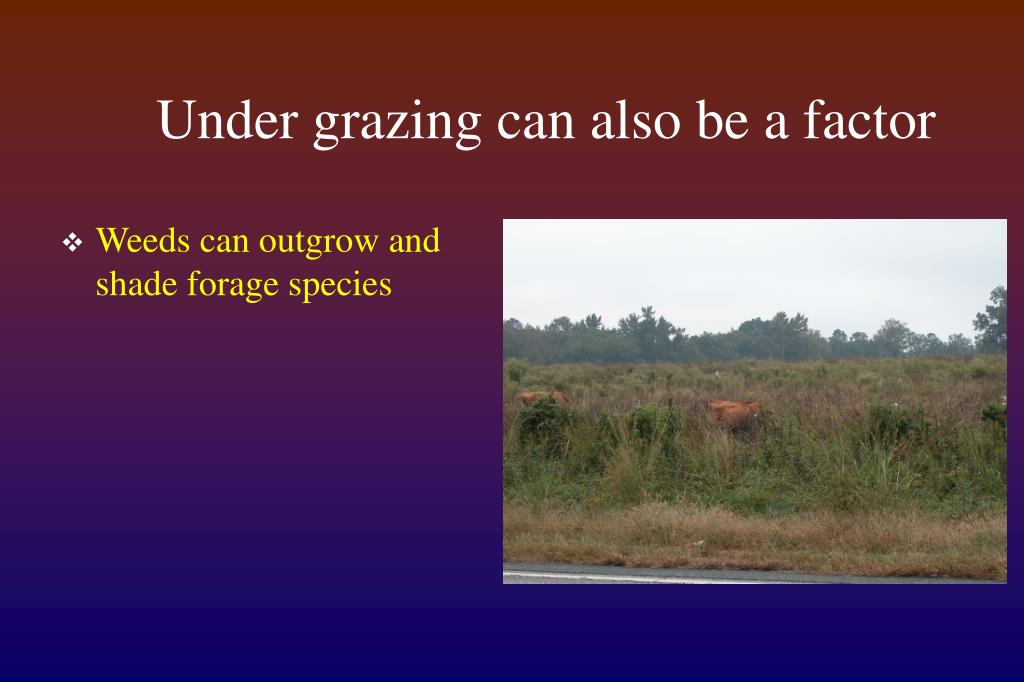 Under grazing can also be a factor