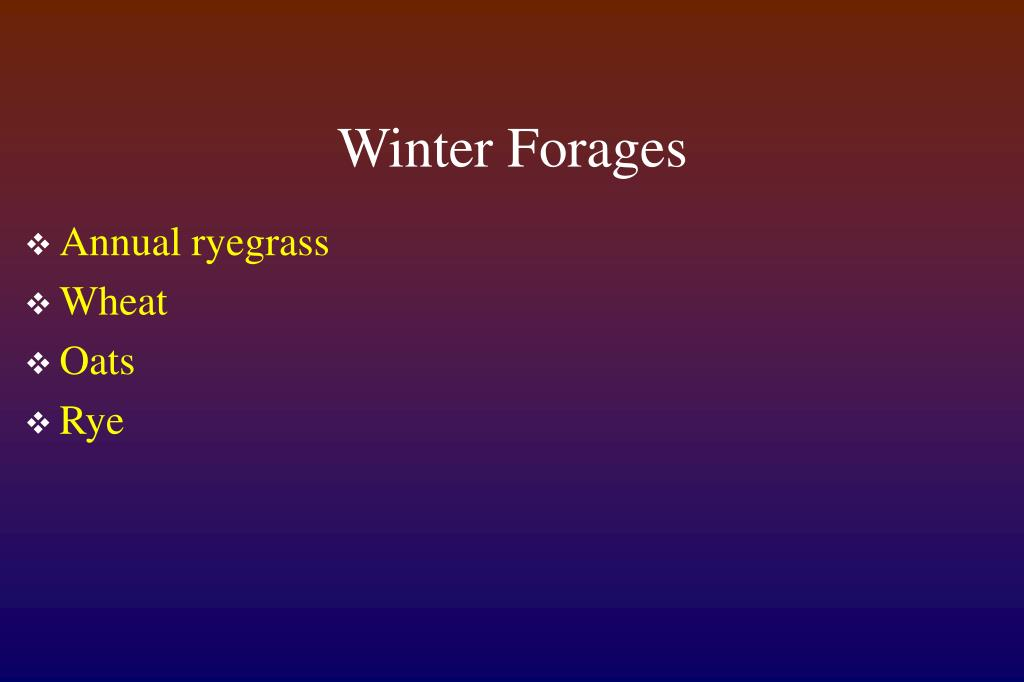 Winter Forages