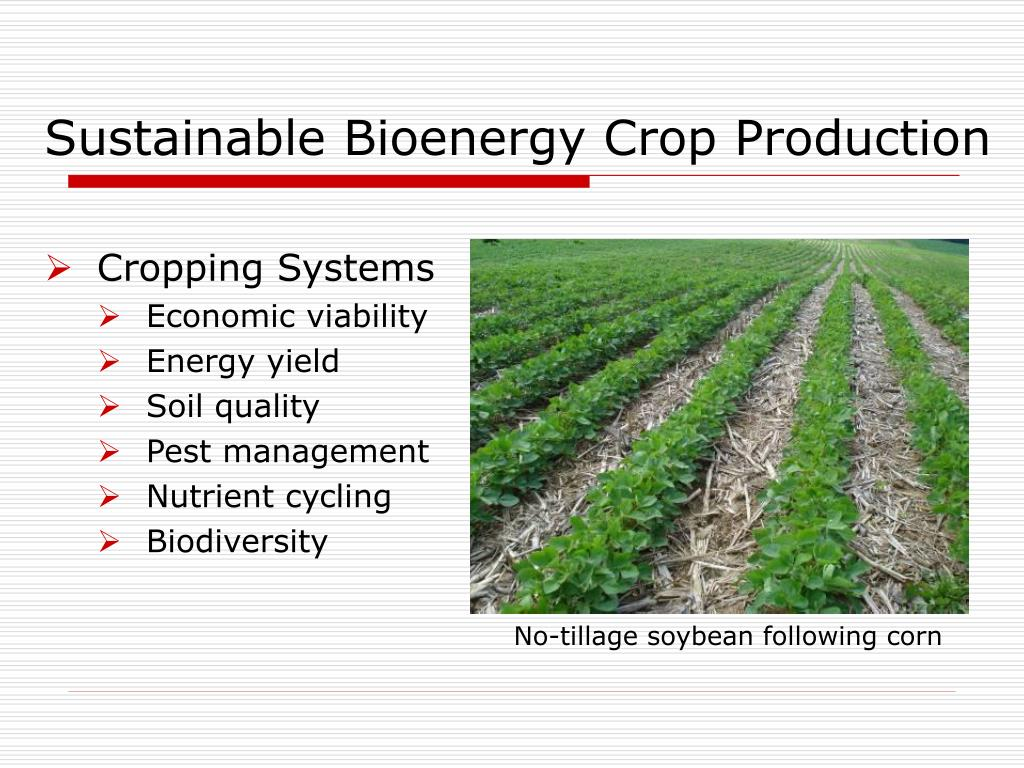 Sustainable Bioenergy Crop Production