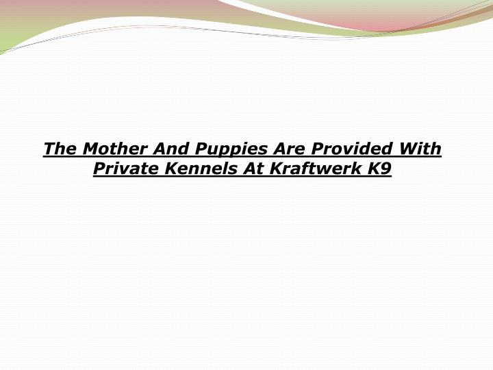 The Mother And Puppies Are Provided With Private Kennels At Kraftwerk K9