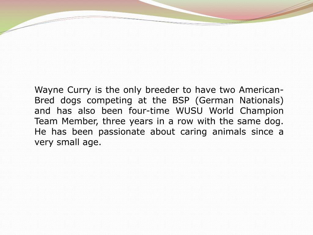 Wayne Curry is the only breeder to have two American-Bred dogs competing at the BSP (German Nationals) and has also been four-time WUSU World Champion Team Member, three years in a row with the same dog. He has been passionate about caring animals since a very small age.
