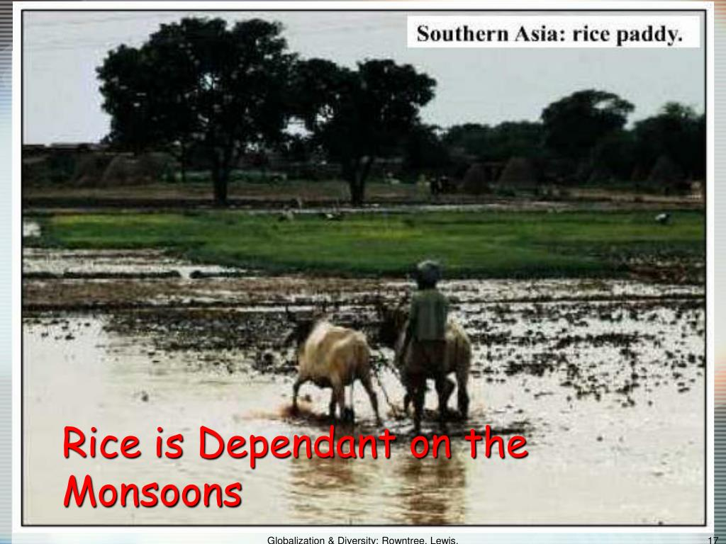 Rice is Dependant on the Monsoons