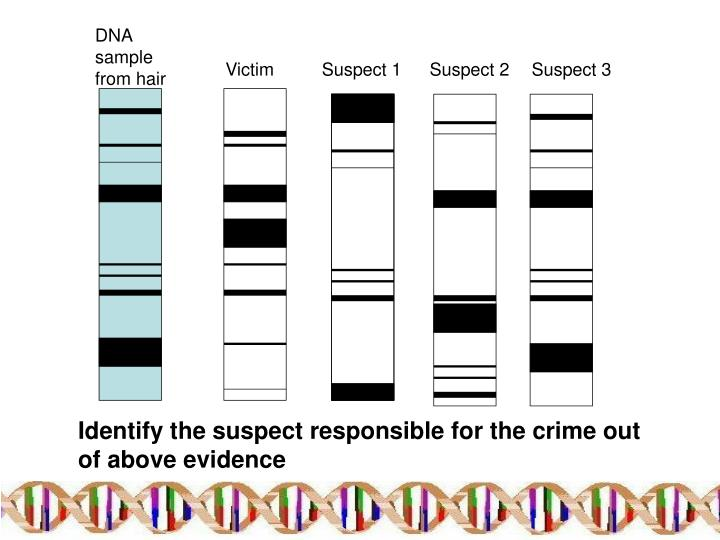 DNA sample from hair