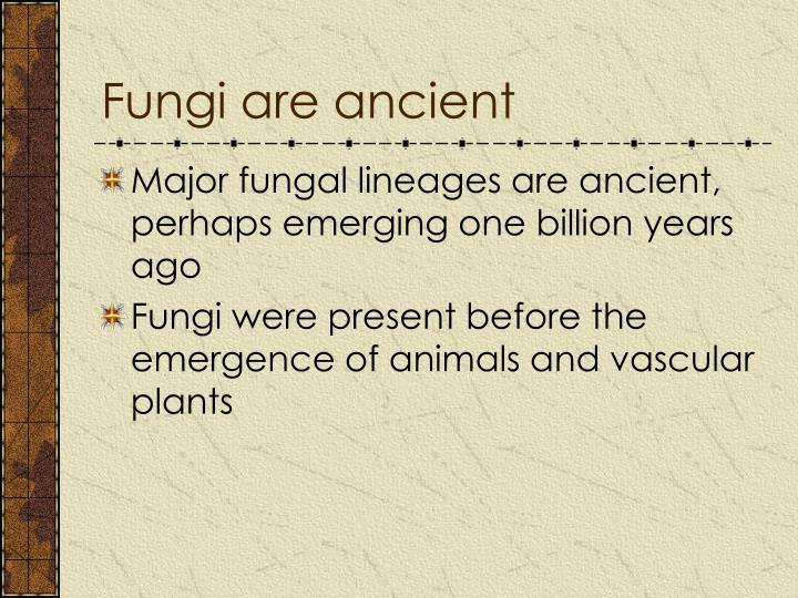 Fungi are ancient
