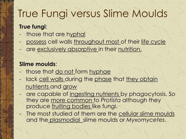 True Fungi versus Slime Moulds