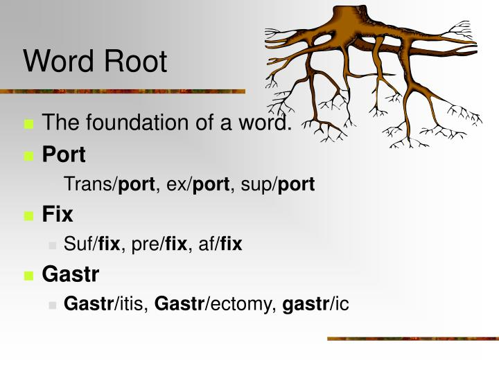 Word Root