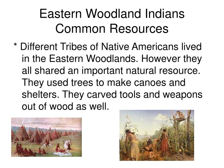 Trees Used For Natural Resource