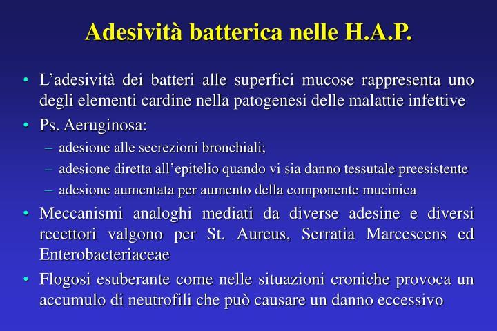 Adesività batterica nelle H.A.P.