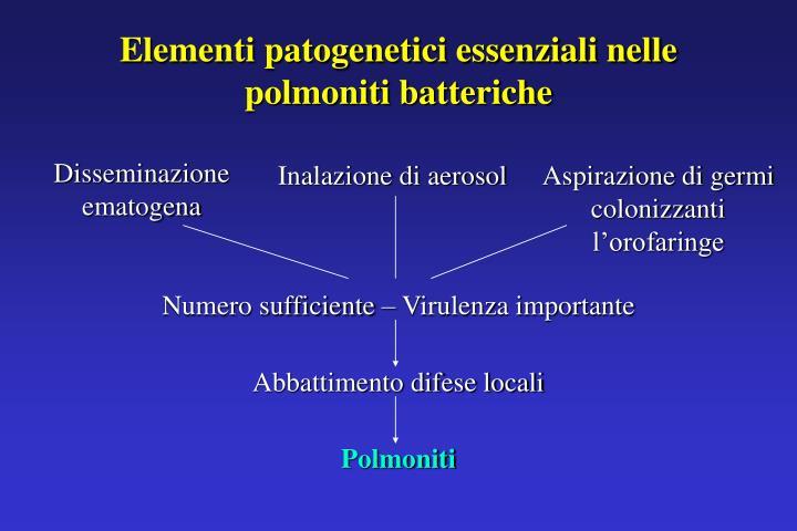 Elementi patogenetici essenziali nelle polmoniti batteriche