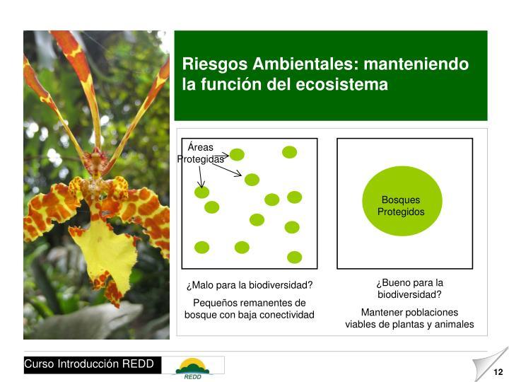 Riesgos Ambientales: manteniendo la función del ecosistema