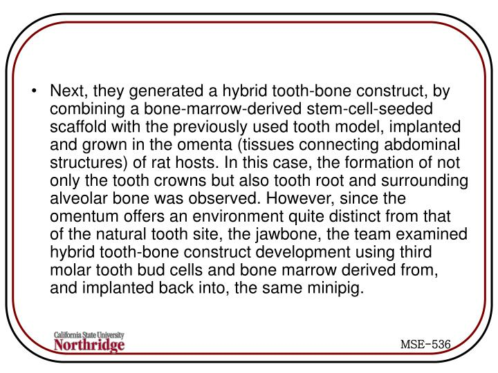 Next, they generated a hybrid tooth-bone construct, by combining a bone-marrow-derived stem-cell-seeded scaffold with the previously used tooth model, implanted and grown in the omenta (tissues connecting abdominal structures) of rat hosts. In this case, the formation of not only the tooth crowns but also tooth root and surrounding alveolar bone was observed. However, since the omentum offers an environment quite distinct from that of the natural tooth site, the jawbone, the team examined hybrid tooth-bone construct development using third molar tooth bud cells and bone marrow derived from, and implanted back into, the same minipig.
