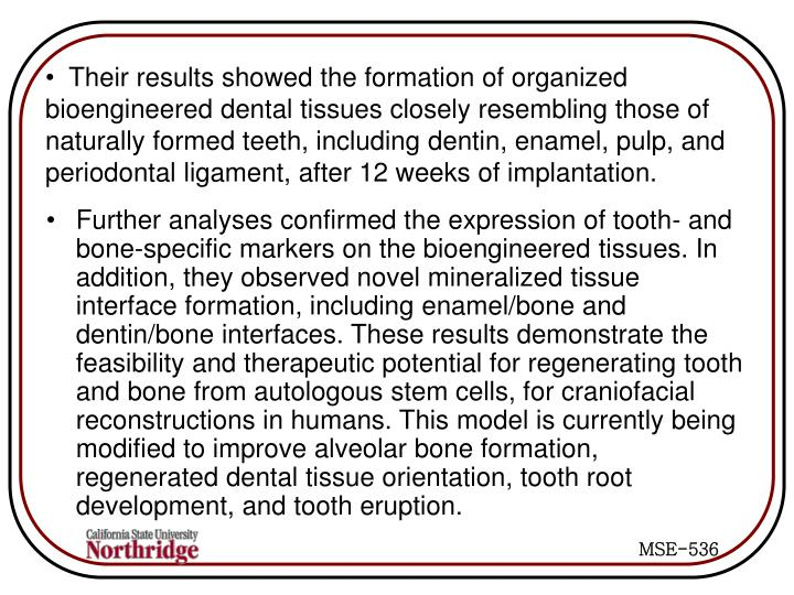 Their results showed the formation of organized    bioengineered dental tissues closely resembling those of naturally formed teeth, including dentin, enamel, pulp, and periodontal ligament, after 12 weeks of implantation.