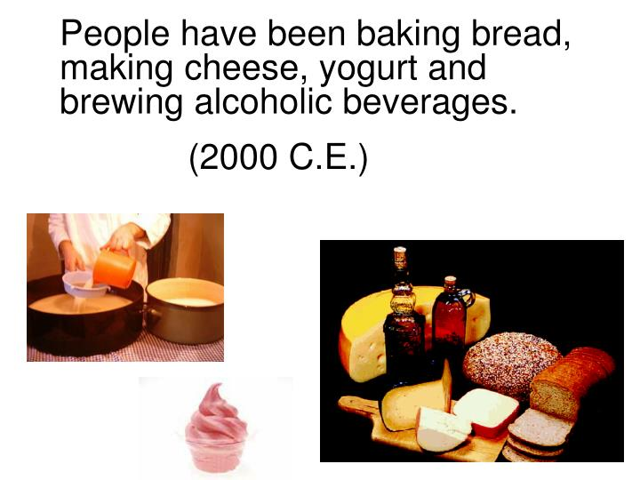 People have been baking bread, making cheese, yogurt and brewing alcoholic beverages.