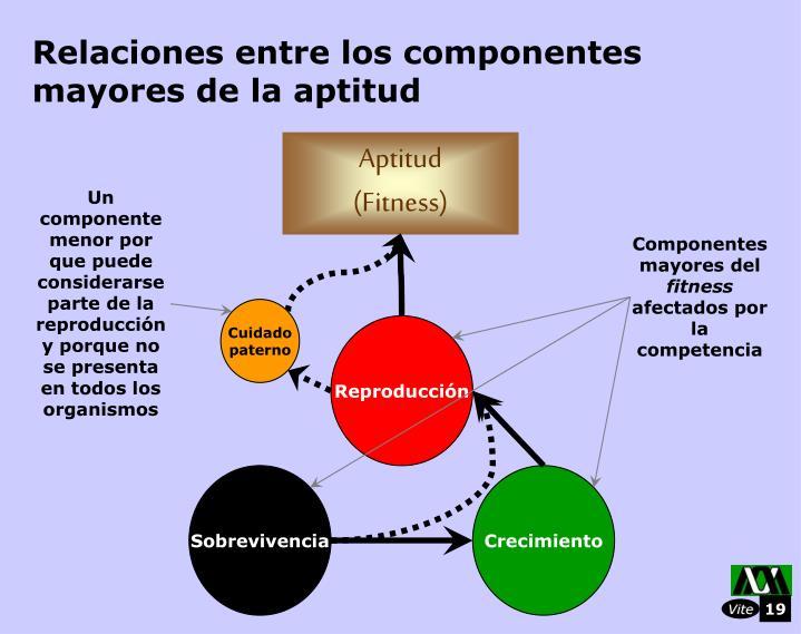 Relaciones entre los componentes mayores de la aptitud