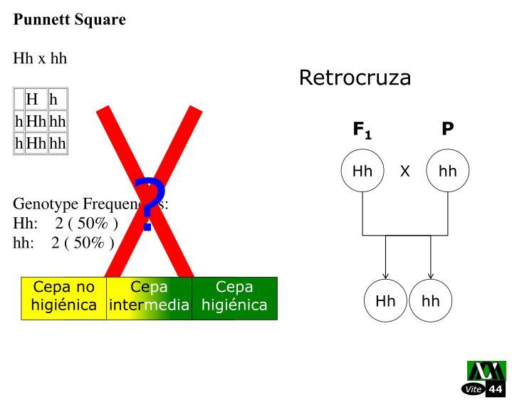 Retrocruza