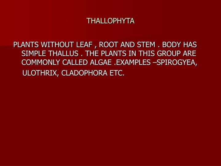 THALLOPHYTA