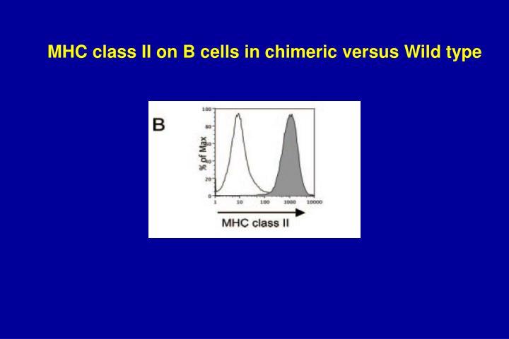 MHC class II on B cells in chimeric versus Wild type