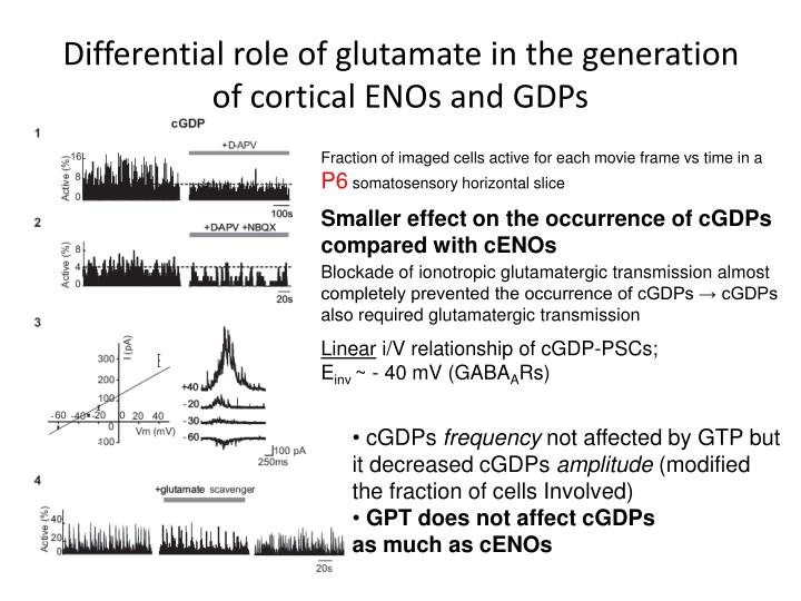 Differential role of glutamate in the generation of cortical ENOs and GDPs