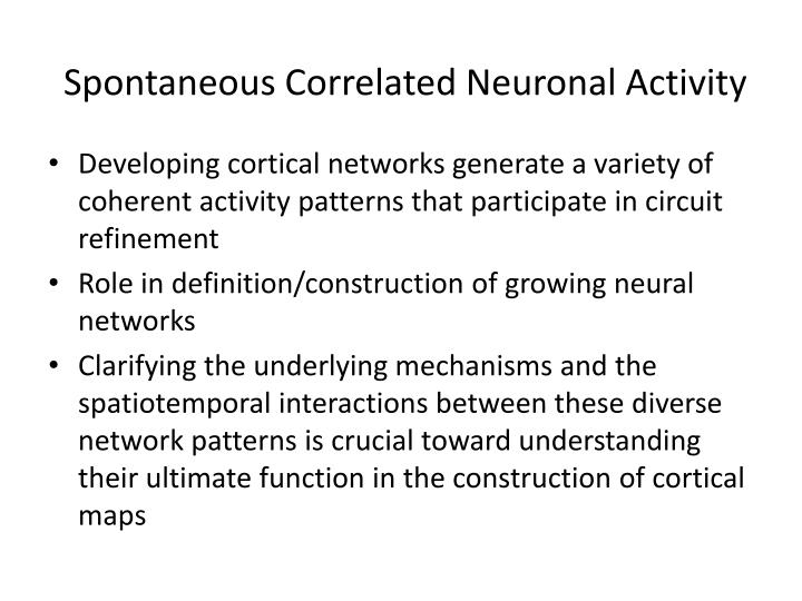 Spontaneous Correlated Neuronal Activity