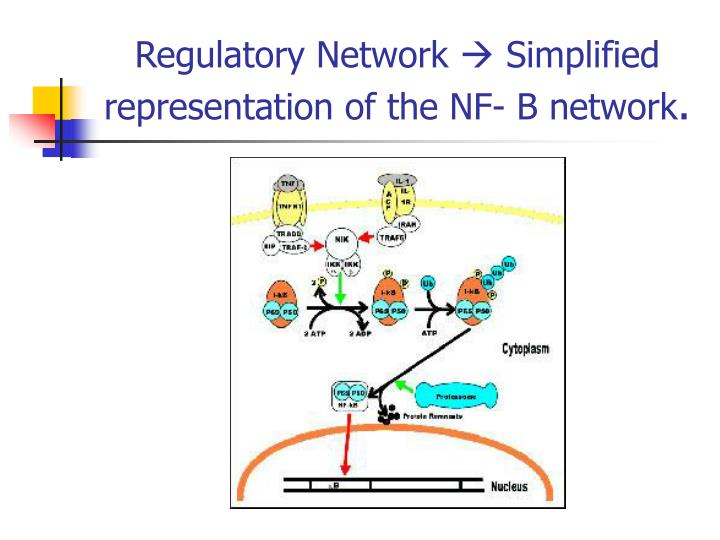 Regulatory Network