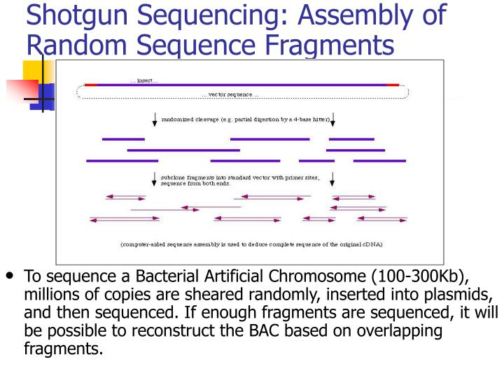 Shotgun Sequencing: Assembly of Random Sequence Fragments