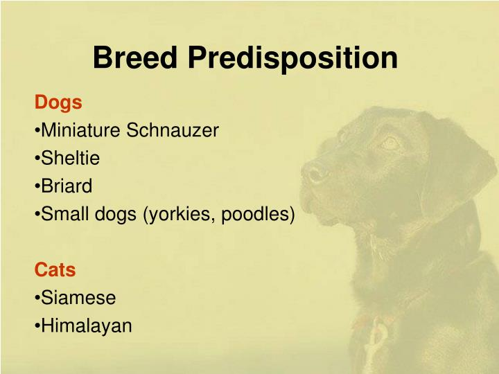 Breed Predisposition