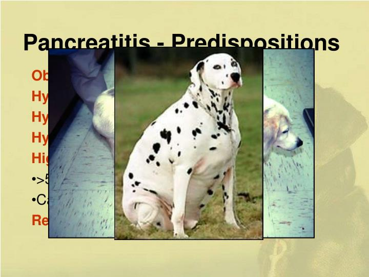 Pancreatitis - Predispositions