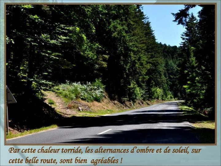 Par cette chaleur torride, les alternances d'ombre et de soleil, sur cette belle route, sont bien  agréables !
