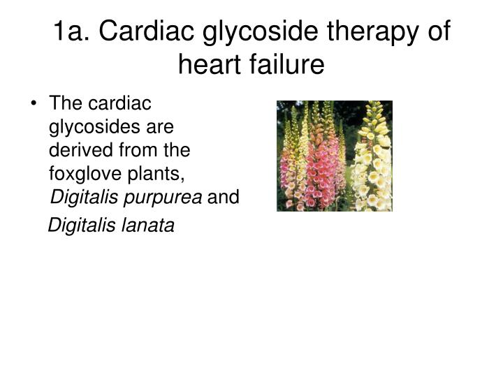 1a. Cardiac glycoside therapy of heart failure